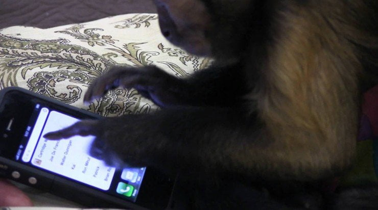 #videovrijdag Geef een aap een smartphone…