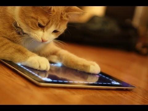 #videovrijdag Lach je suf om deze dieren met een iPad
